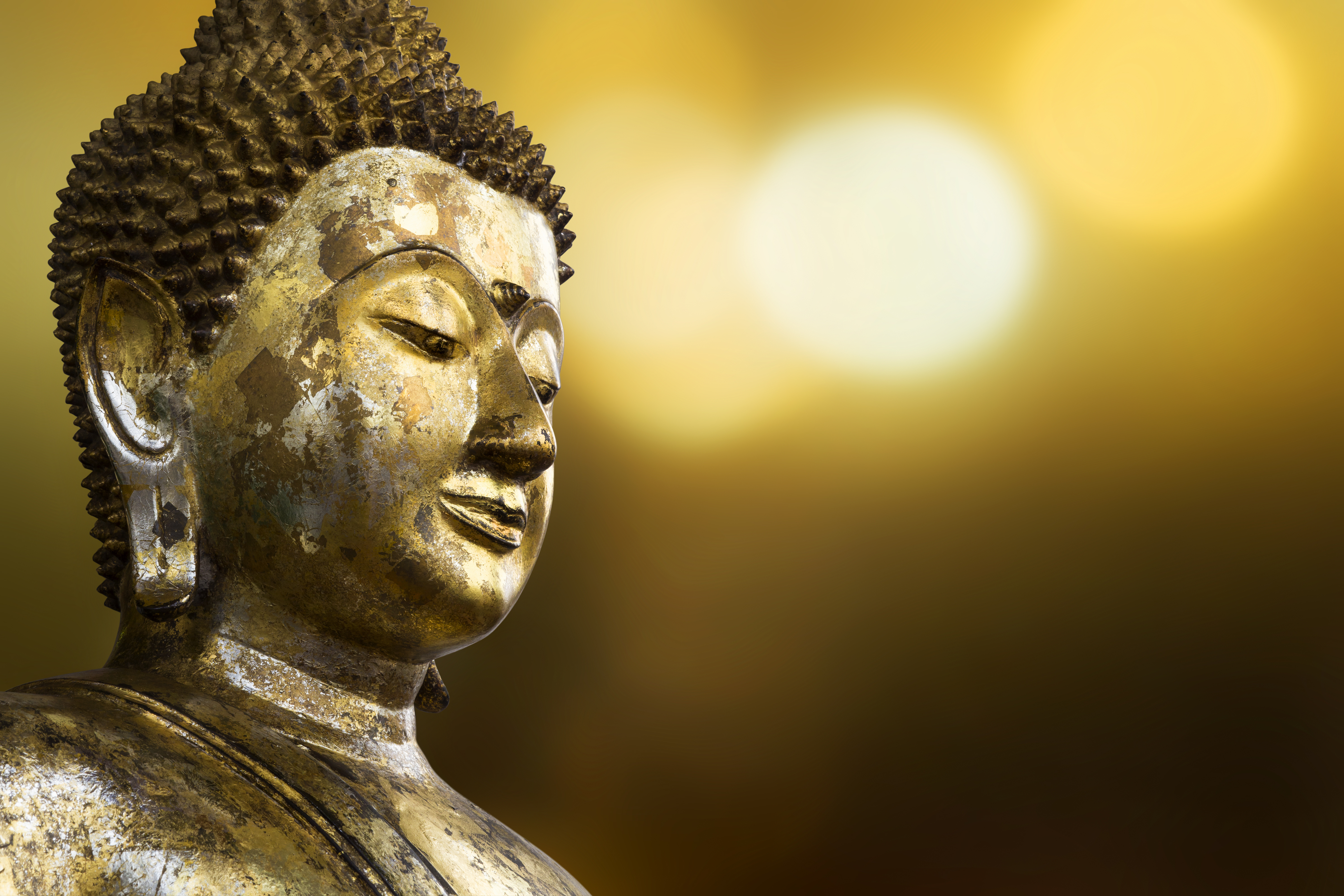 Our Spring Meditation and Buddhism Course
